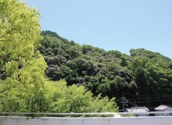 病棟のバルコニーから見た森林側の景色